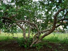 Man lives in guava tree until his wife comes to apologize   http://www.yourideaofawesome.com/#!/2012/12/man-lives-in-guava-tree-until-his-wife.html