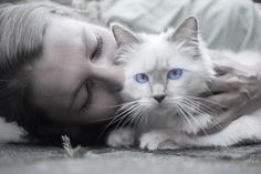 It's difficult for cat owners to satisfy their Cats, Because they are particularly vindictive animals.Here are 10 Mistakes Cat Owners Should Strictly Avoid. Cool Cats, Cool Cat Trees, Friendly Dog Breeds, First Time Cat Owner, Gatos Cool, Cat Accessories, Cat Behavior, Cat People, Cat Facts