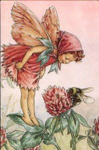 Clover Flower Fairy! So cute!!