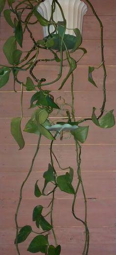 Koikkelasta kajahtaa!Munatemperalla samettista pintaa Plant Leaves, Plants, Plant, Planets