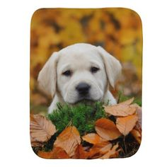 #Autumn Labrador Baby Burp Cloth - #labrador #retriever #puppy #labradors #dog #dogs #pet #pets