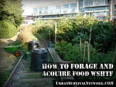 Some Thoughts on Foraging and Growing Food WSHTF | Urban Survival Network