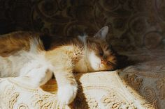 Image about cute in furballs: cats edition by jinger ♡ Crazy Cat Lady, Crazy Cats, Amor Animal, 6 Images, Fauna, Cats And Kittens, Cute Cats, Fur Babies, Cat Lovers