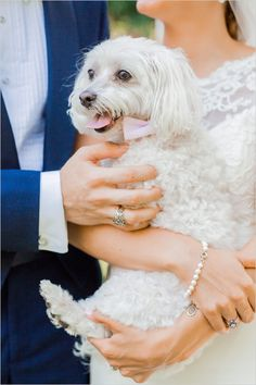 wedding dog @weddingchicks