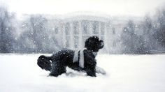 Obamas dog Bo- Christmas card 2012