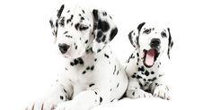 Cuccioli di cane: educarli al guinzaglio e all'ascolto