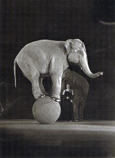 Josef Donderer, Jenny und Piccolo, Scala, 1936.