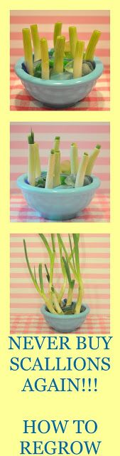 How To Grow Green Onions. I think I'd do it in potting soil. ?