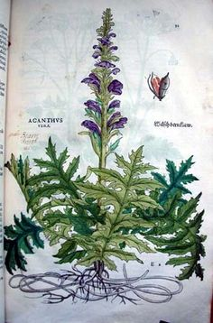 Leonhart Fuchs' De historia stirpium commentarii insignes, or Notable Commentaries on the History of Plants (1542).
