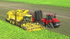 Thu hoạch củ cải đường ở Đức bằng  Những cổ máy khổng lồ