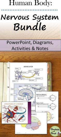 NEW DOWNLOAD: The Human Body Nervous System Notebooking Unit ...