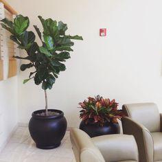 Delta Dental #planters #foliateplantdomaine #foliate