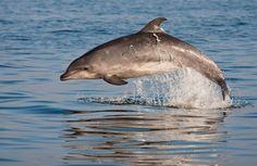Delfín .  Fotografía de Rodrigo Moraga.