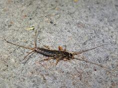 10 aprócska lény, ami mind megbújhat a lakásodban - Otthon | Femina Insects, Mindfulness, Consciousness