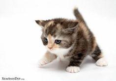 cute cat - Google Search