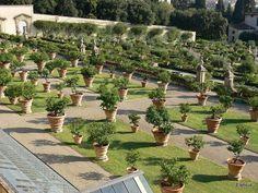 Villa Medicea di Castello - Flip - Picasa Webalbums