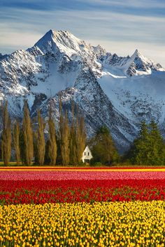 Skagit County, Washington State, Lou Nicksic