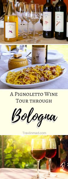 BOLOGNA, ITALY - One of the best things to do in Bologna Italy for food and wine lovers is taking a Bologna wine tour of the Valsamoggia region and discovering wines completely unique to the region, like organic Pignoletto wine. Can you think of anything better than enjoying the wines of Emilia Romagna - some of the best Italian wines - than right at the source? Salute! | Bologna wine tour, Bologna Italy, wines of Emilia Romagna, wine tour Bologna, Italy, #winetour #pignoletto…