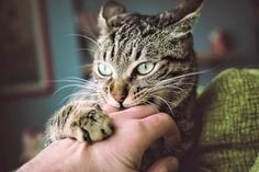 Photo of Cat Biting and Scratching Hand - © Getty / Westend61