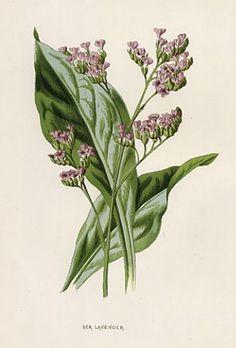 purple-02-4.jpg (271×400)