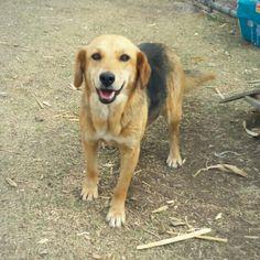 Pelota es una perrita joven, muy sociable y amistosa. Le encanta jugar y tomar el Sol. Ya está vacunada, esterilizada y desparasitada.