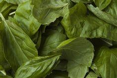 Bazalka posvátná (Ocimum tenuiflorum) je známým elixírem života, protože podporuje dlouhý život. Pochází z indického subkontinentu.