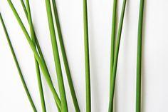bulrush stems  (mary jo hoffman)