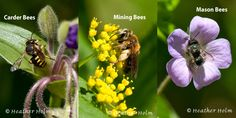 Celebrate National Pollinator Week--photos of some bees, beetles and wasps