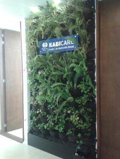 jardn vertical de planta conservada en alicante un trabajo muy interesante jardines verticales pinterest alicante