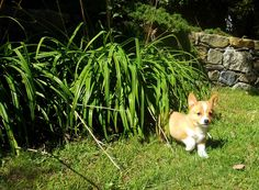 Tiny Pup. 2012 -Katy Silb