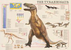 Tyrannosaurus Rex Facts and Figures T-Rex Dinosaur Education Poster 26x38