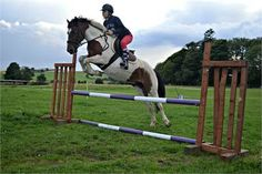 Mare for sale - 12yo 14hh family/PC type mare! http://www.equineclassifieds.co.uk/Horse/12yo-14hh-familypc-type-mare-listing-1000.aspx#.VAWAe6MTCZY