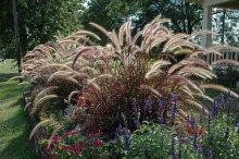 Trawy ozdobne - gatunki i odmiany polecane do ogrodu, sprzedaż traw Heavy Metal, Plants, Heavy Metal Music, Flora, Plant