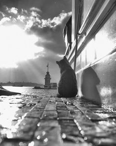 "Black & White""Photography, Saved from Emel . Amazing Photography, Street Photography, Art Photography, Animals Beautiful, Cute Animals, Photo Chat, Jolie Photo, Black And White Pictures, Great Photos"