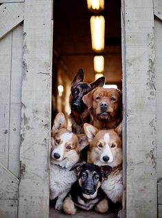Waiting for the Guest of Honor to Arrive - A full doggy door - Pixdaus