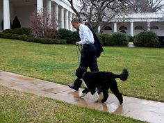 PRESIDENT BARACK OBAMA    Before jetting to Hawaii, Obama leads trusted advisor Bo into the Oval Office