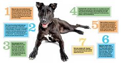 Seven Summer Tips for You and Your Dog. | The Bark