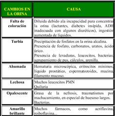 Laboratorio Clinico: Examen general de orina ( E.GO.)