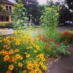 Came upon this lovely street side #garden in NE Portland while on my morning walk. Sunny and bright-- nice way to start the day.
