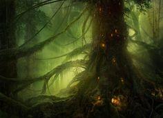 rainforest dwellers?
