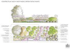 South West Facing British Native Plants FREE Planting Plan  #Free #plantingplan…