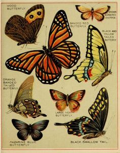varieties of butterflies...for the record :)