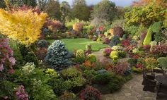 """Britain's Best Back Gardens: Alan Titchmarsh's five favourites """"The key to their garden is having a skeleton, a framework of evergreen plants, shrubs or conifers around which the rest of the garden hangs. If you're clever and use evergreens that are a bit brighter, like yellow or blue conifers, or something like Acer senkaki, with its beautiful red stems in winter, you do end up having a garden that is colourful all year round. It's quite a multi-coloured garden. It's very tonal. It's not…"""