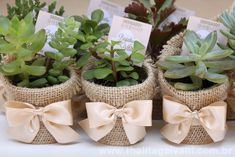 Burlap and ribbon covered terra cotta pots with succulents