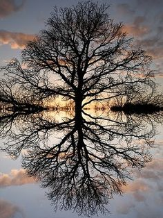 tree reflection  - Life holds many shades of darkness and light, it builds strength for storms ahead.