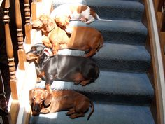 Ha! Doxies will follow wherever the Sun leads!