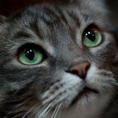 ♥ Oh so irresistible!  Precious face and gorgeous green eyes!  :o)