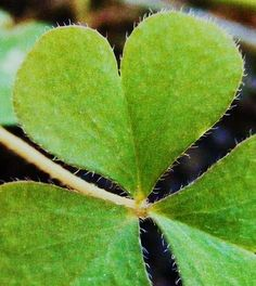 Mother Nature has a Heart, and Father God holds it gently. Happy Heart, Love Heart, Heart In Nature, Heart Images, My Flower, Mother Nature, In This World, Plant Leaves, Around The Worlds