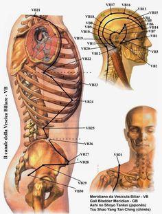imagens de pontos de auriculoterapia dores reumáticas - Pesquisa Google