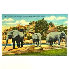 Vintage Chicago Zoo Elephant Postcard by EstrangedEphemera on Etsy